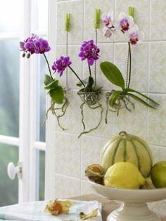 orchidee richtig zur ckschneiden orchideen pinterest. Black Bedroom Furniture Sets. Home Design Ideas