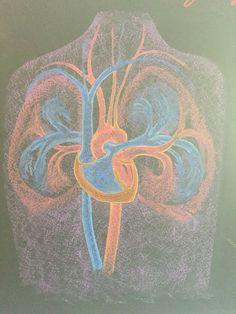 Physiology circulation Waldorf grade7 chalkboard