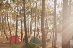 Praia da Gale - Camping in Portugal