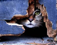 peek - The jagged shape of the hole, the beautiful blue paint and that sweet cat face.
