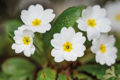 February flowers to plant chosen by Keith Wiley