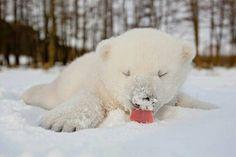 Icebear :)