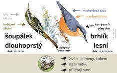 Určování ptáků - Ptačí hodinka Creative Kids, Bird Watching, Activities For Kids, Survival, Birds, Nature, Animals, Education, Biology