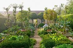 Free-standing espaliered fruit trees in the kitchen garden of landscape designer, Bunny Guinness. Photo by Robin Baker for Contemporary Designers' Own Gardens....