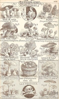 French mushrooms