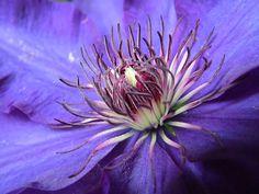 Çiçek, Akasma, Mor, Mavi