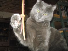 Katten Gizmo: Gizmo leker, såå cool han é min katt :)
