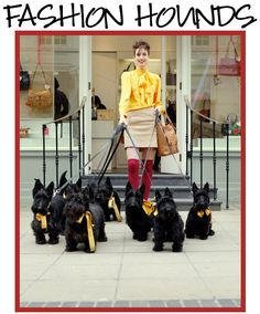 So... if I don't have kids, I could always just adopt a billion Scotties!