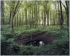 Overgrown WWII bomb craters