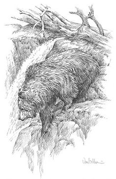 Black Bear Sketches and Drawings | A913271575: Grizzly Bear Drawing by Ron Van Gilder
