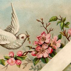 Vintage Dove Gift Tag – Pretty!
