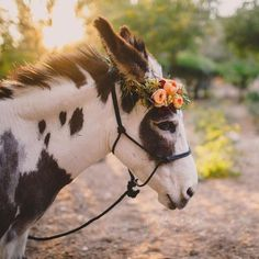Spotted donkey with flower crown Pretty Animals, Cute Baby Animals, Farm Animals, Animals And Pets, Funny Animals, Wild Animals, Baby Donkey, Cute Donkey, Mini Donkey