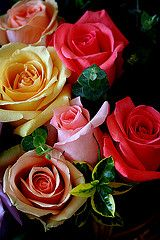 nuance color roses | Flickr - Photo Sharing!