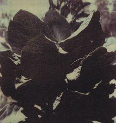Untitled, Gaeta, 1997 by Cy Twombly