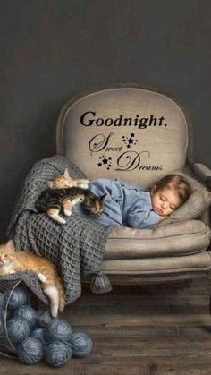 Good Night Cat, Good Night Sister, Beautiful Good Night Images, Romantic Good Night, Good Night Prayer, Cute Good Night, Good Night Friends, Good Night Blessings, Good Night Sweet Dreams