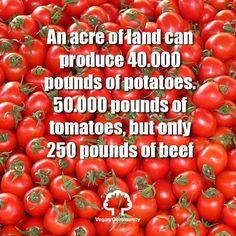 Eat more veggies. Go vegan!     #VeganCommunity #GoVegan #vegetarian #animalrights #veganrules #veganhealth #veganpeople #crueltyfree #veganfun #bestofvegan #eartlings #bestveganrecipes #veganfoodshare #veganfoodlovers #plantbased #vegan #vegantips #veganmexico #veganmadrid #vegano #pet #yoga #vegantosavetheearth #VeganWarrior #veganpower #herbivore #animalabuse #veganitaly  #vegannyc #VeganLifestyle by vegancommunity