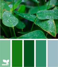 For those who love green!