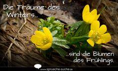 Die Träume des Winters sind die Blumen des Frühlings. ➔ Weitere schöne Sprüche zum Thema Frühling gibt's hier!