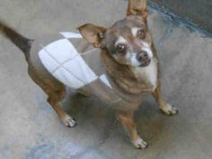 SHARE/PLEDGE/RESCUE/FOSTER/ADOPT/PIN  URGENT  FRITZ  Pet ID: A1275857  Sex: N  Age: 8 Years  Color: BROWN - TAN  Breed: CHIHUAHUA SH  Kennel: 363  OC ANIMAL CARE, 561 The City Drive South, Orange, CA 92868, 714-935-6848  — hier: OC Animal Care.  https://www.facebook.com/media/set/?set=a.10152607637815223.1073741825.315830505222&type=3#!/photo.php?fbid=10153438650630223&set=a.10151287465740223.802367.315830505222&type=3&theater
