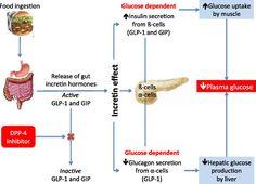 omega 3 6 9 fat loss