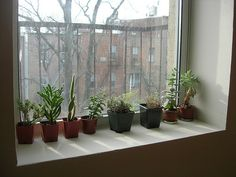 my plant curtain zimmerpflanzen pinterest zimmerpflanzen. Black Bedroom Furniture Sets. Home Design Ideas