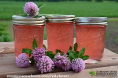 This red clover jelly recipe is one way to use an abundance of clover blossoms. There's also information on the herbal uses of red clover.