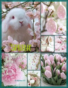 Spring / Easter in pink by Reyhan Seran Dursun - Ostern Mood Colors, Colours, Happy Easter, Easter Bunny, Collages, Color Collage, Beautiful Collage, Easter Celebration, Hello Spring