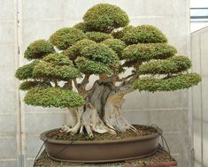 Love me some bonsai plants :)