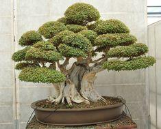 Love me some bonsai plants :)