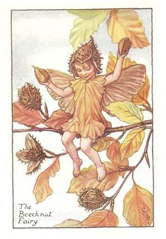 http://www.wellandantiquemaps.co.uk/lg_images/The-Beech-Nut-Fairy.jpg