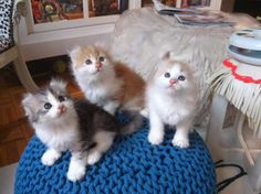 How adorable are these babies! Pet 1, Dog Cat, American Curl Kittens, Animals And Pets, Cute Animals, Animal Fur, Cute Animal Photos, Warm Fuzzies, Here Kitty Kitty