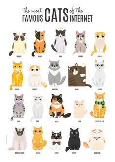 Illustration by NuroNuro (Nurit Benchetrit), a graphic designer and illustrator from Tel Aviv. I Love Cats, Crazy Cats, Cute Cats, Funny Cats, Funny Animals, Cute Animals, Warrior Cats, Illustration Inspiration, Cute Cat Illustration