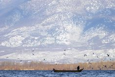 An Albanian fisherman rows his boat in Shiroke lake, near the city of Shkoder, some 110 km (69 miles) north of the capital Tirana, December 18, 2011. (REUTERS/Arben Celi)