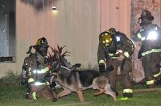 Heroic Dog Rescues 2 Children from House Fire - Neatorama