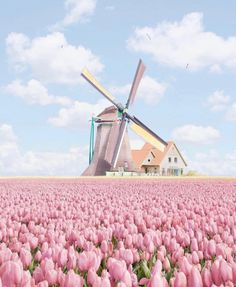 New Pictures Tulip fields Concepts Lengthy dwell the tulip ! Flores Wallpaper, Tulip Fields Netherlands, Beautiful World, Beautiful Places, Places To Travel, Places To Go, Travel Destinations, Wallpaper Aesthetic, Pink Tulips