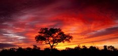 Sunset at Kruger National Park Kruger National Park Safari, National Park Tours, African Sunset, Sunset Pictures, What A Wonderful World, Free Travel, African Art, Wonders Of The World, South Africa