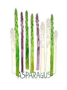 Types of Asparagus Art Print
