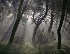 The shadows dance, 10x8 fine art photo print. dark dramatic misty haunting forest photo