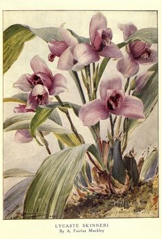 Beautiful flowers and how to grow them, - Biodiversity Heritage Library