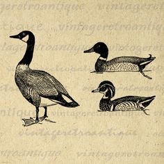 Digital+Printable+Ducks+and+Goose+for+by+VintageRetroAntique,+$3.50