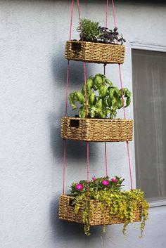 Check what to plant in a vertical garden #verticalgarden
