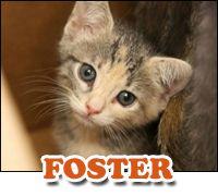SAPA – San Antonio Pets Alive   Donate  Donate now to help us make San Antonio No Kill!
