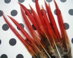 Natural Red tip feathers - Golden pheasant thin spiky real feather for millinery, crafts, jewelry making / 4-6 in (10-15 cm) long / F68-4
