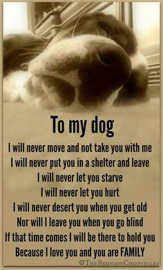 Beautiful! I wish every human who has a pet as a family member felt this way!