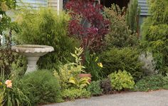 small-shrub-for-border-gardens-evergreen-borders-for-small-plants-600x380.jpg (600×380)