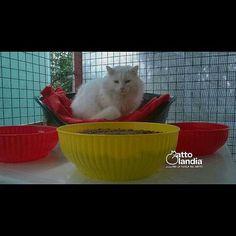 Re #Astro.. prego: la MicioRegalCena è servita.. #gattolandia #onlus #cat #neko #chat #gatto #katse #gato #lovecats #meow #miao #catlover #ilovecats #adoptdontshop #adotta #adottanoncomprare #rescuecat #catsoftheday #catofinstagram #kitty #kitten #instacats #animallovers #amicideigatti #thedailykitten #kittensofinstagram #gattini #refuge #park by gattolandia_official_fanpage