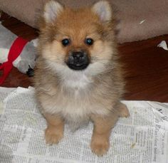 gimme this lil guy!