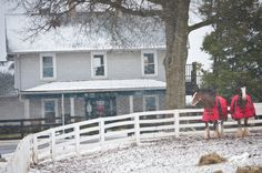 Clydesdales in the first snow of the year at Kentucky Horse Park Kentucky Horse Park, Triple Crown Winners, Clydesdale, Gentle Giant, Horse Racing, Snow, Ads, Horses, Outdoor