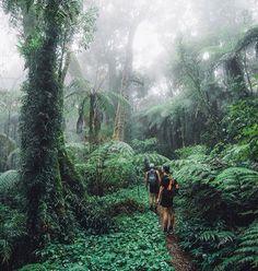 Lamington National Park, Queensland, Australia www.handyman-goldcoast.com