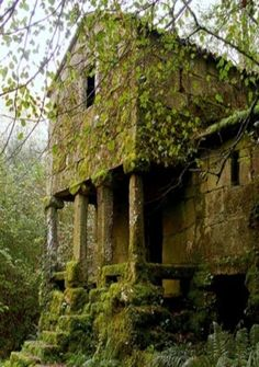 Old Farm House Covered In Moss & Vines